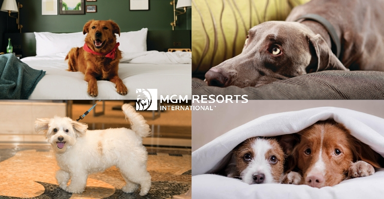 MGM Resorts Dogs